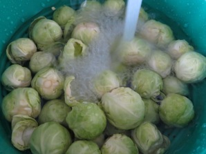 Wash sprouts thoroughly